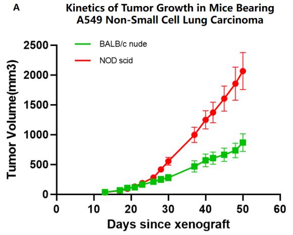 図1. ヒト胃癌細胞(HGC-27)がBALB/c nudeヌードマウスにて腫瘍モデルを有効に構築できる|サイヤジェン株式会社(Cyagen)